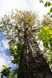 Big tree. Nature grow develop expand increase Royalty Free Stock Images