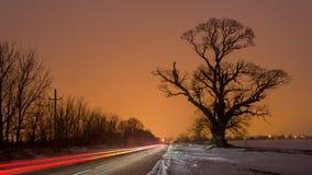 Big tree near road with orange sky in bacground and car light. Big old tree near road with orange sky in bacground and car lights trails Stock Image
