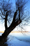 Big tree next to Lake Balaton in winter time,  Hungary Stock Photos