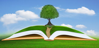 Big tree on open book with blue sky background Royalty Free Stock Images