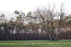 Big tree in a open field Royalty Free Stock Images