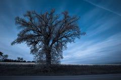 Big tree Royalty Free Stock Photos