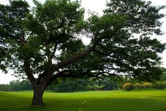 Big tree in park. The big tree on the grass in park and cloud sky background Stock Images