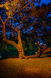 Big tree in a park. Royalty Free Stock Photos