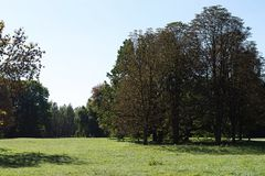 Big tree in the park on blue sky background stock images