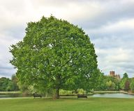 Big Tree in Park/Benches/Church Royalty Free Stock Photography