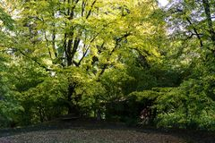 Big tree in park front view with day light royalty free stock photography