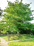 Big tree in park looks so beautiful and tree,s front a pole photo seen looks so attractive stock photography