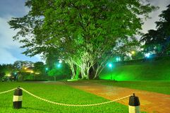 Big tree at a park by night Stock Images