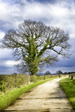 Big tree and path in spring. Cloudy sky, after rain Stock Photo