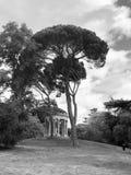 A big tree royalty free stock image