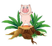 A big tree with a pig Royalty Free Stock Images