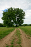 Big tree right side by road in green meadow Royalty Free Stock Image