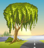 A big tree at the road Stock Images
