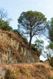 Big tree on a road Royalty Free Stock Photos