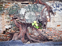 Big tree root Stock Photo