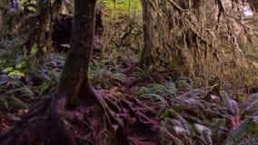 Big Tree Roots Stock Photos