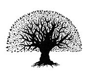 Big tree with roots for your design Royalty Free Stock Photography