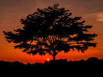 A big tree is silhouette at orange sky. Sihouette a big tree at sunset view Stock Image
