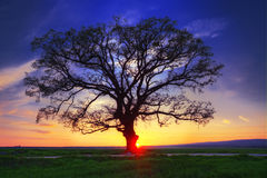 Big tree silhouette, sunset shot Stock Photography
