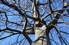 Big tree, small birdhouse Stock Photography