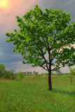 Big tree and small city Royalty Free Stock Photography