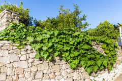 Big tree in Small cretan village in Crete  island, Greece Royalty Free Stock Images