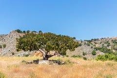 Big tree in Small cretan village in Crete  island, Greece Royalty Free Stock Photography