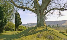 Big tree on a small hill. Royalty Free Stock Images