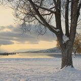 Big tree on snow covered lake shore Royalty Free Stock Photo