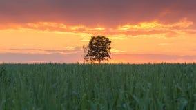 Big tree stand alone Stock Image