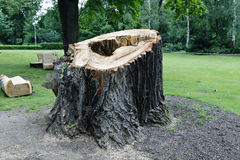 Big tree stump in the park Stock Images