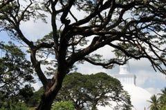 Big tree and stupa Stock Images