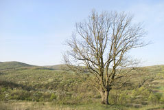 Big tree in sunny day Royalty Free Stock Photography