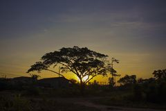 Big Tree Sunrise Wallpaper and Background Stock Photography