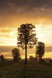 Big tree at sunset on New Zealand's south island Royalty Free Stock Image