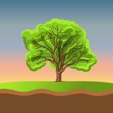Big tree on sunset Royalty Free Stock Images