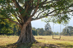 Big tree with swing. On green field, Chiang Mai, Thailand Royalty Free Stock Photography