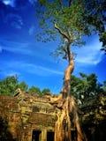 Big tree. At Ta Prohm Prasat in Siem Reap stock photo