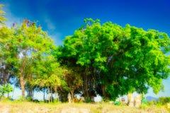 Big tree and Thailand`s nature stock photo