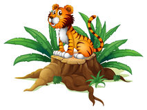 A big tree with a tiger Stock Image