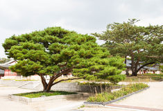 A big tree for tourist to rest stock photos
