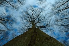 Big Tree - Treetop Stock Images