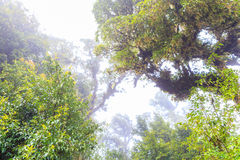 Big tree in tropical forest Royalty Free Stock Photos