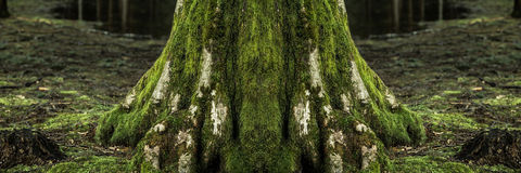 Big tree trunk Stock Images
