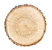 Big tree trunk slice cut from the woods. Textured surface with rings and cracks. Neutral brown background made of hardwood royalty free stock photography