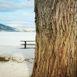 Big tree trunk winter landscape Royalty Free Stock Image