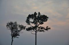 Big tree under evening light Royalty Free Stock Photography
