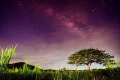 Big tree under milky way Stock Image