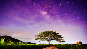 Big tree under milky way Stock Images